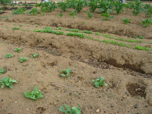 garden0502