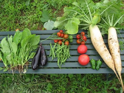 garden0712_1