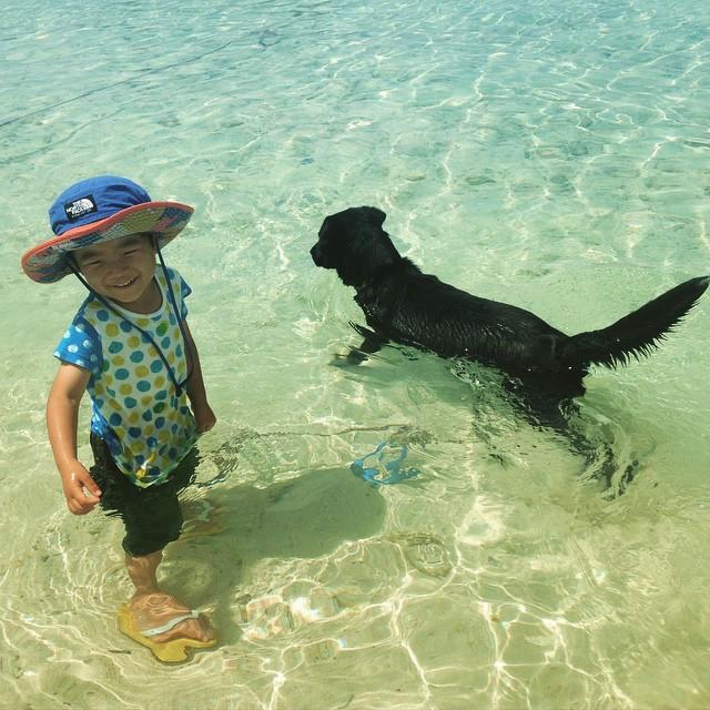 先のことなんて考えない。子どもは自由で良い。猛烈に暑かったし、犬が気持ちよさそうだったんだよな、きっと #ishigaki