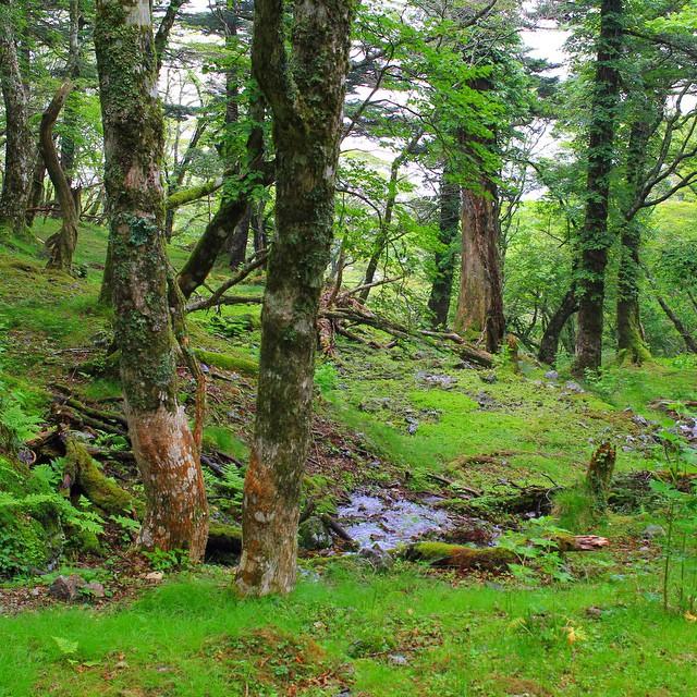 森の中の美しい水場