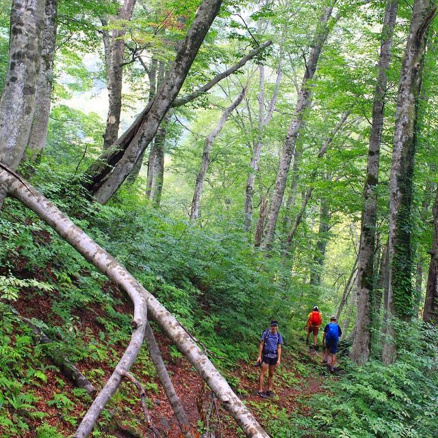 おはよう!飯豊山、ブナの森を進む。