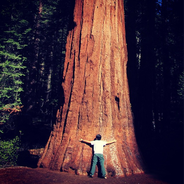 Big hug #sequoire #yosemite