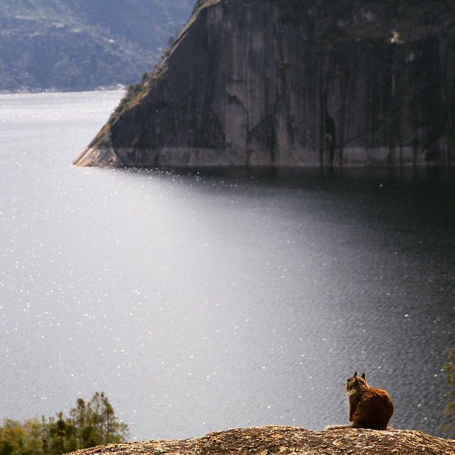 Hey dude! #Hetchhetchy #yosemite